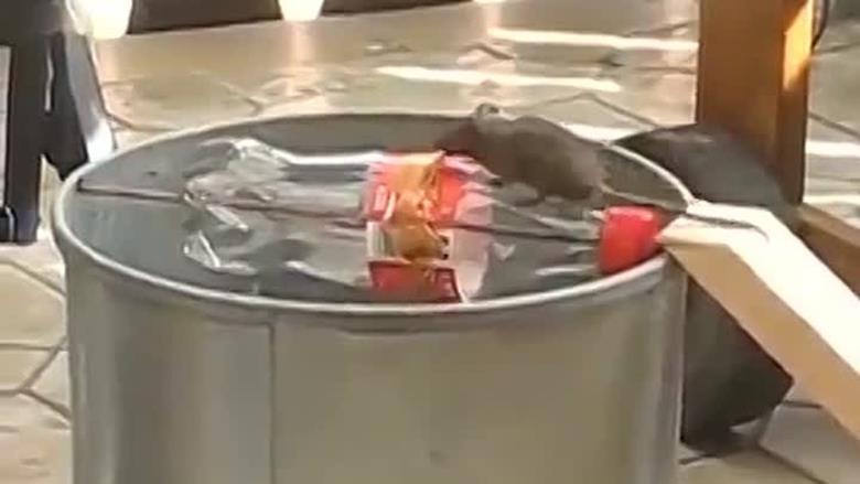 Мышеловка из кастрюли с водой